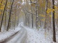 Road in the Winter Wood