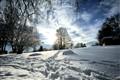 sunny winter_edit