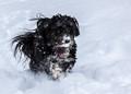 Running thru the snow