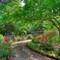 Stevenson Garden #9  ©2009 Derek Dean