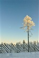 wooden fences and the tree and the snow