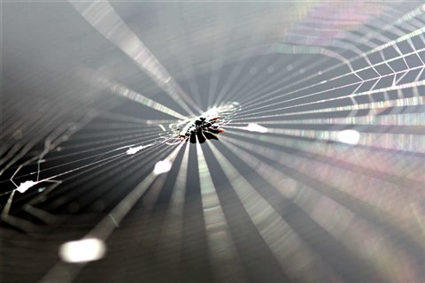 spider copy2