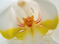 Macro shot of the inside of an orchid resembling a butterfly.