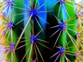 thorny texture of a cactus