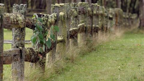ebor-cemetery0018