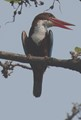 A big year -birds-18-no-1