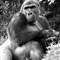 12 Zoo ape