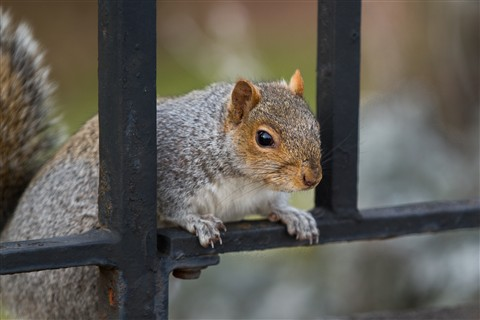 Squirrel jailed for stealing nuts in New York City Parks