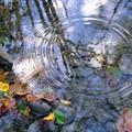 Autumn Reflections & Ripples