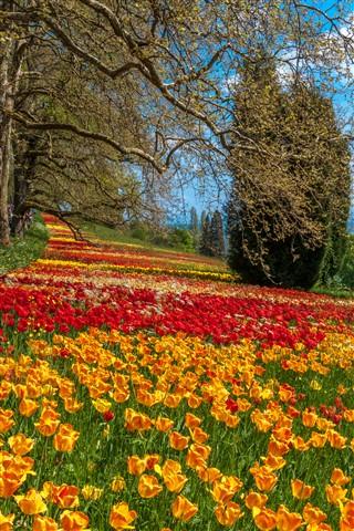 Tulip-carpet2