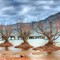 Glenorchy trees