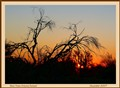 Bare Trees Arizona Sunset