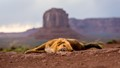 Lonesome Dog of Monument Valley-3631