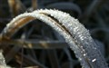 Frost1_8041