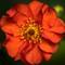 Flower: