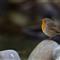 bird-garden-1-apr-00