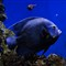 fish20120821_2