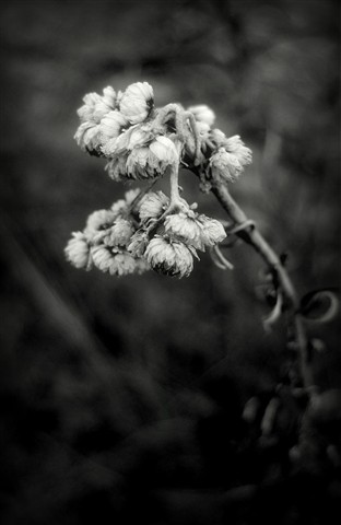 seeds in winter