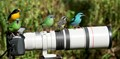 Canon lens 400mm 5.6