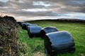 Bales of Silage . . .