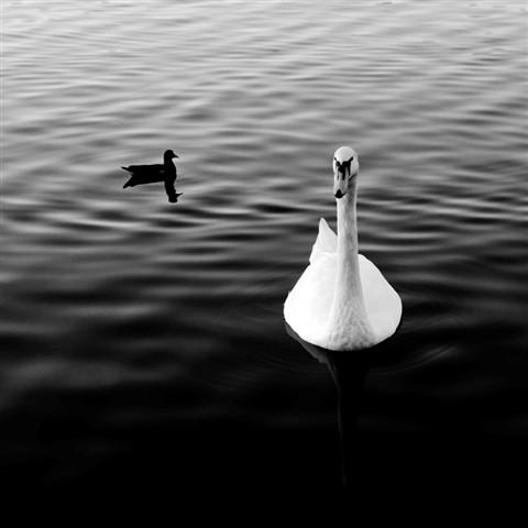 SwanBW