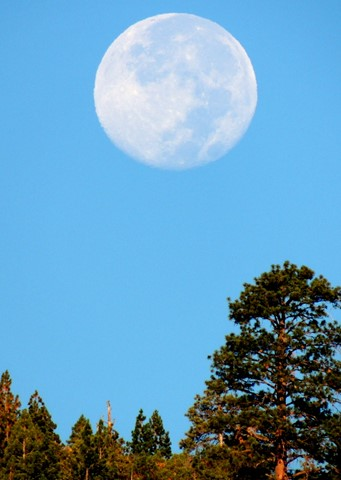 Blue Moon, R-Ranch, August 25, 2013 052
