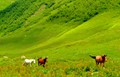 Meadows in the Greater Caucasus