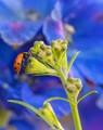 dude looks like a ladybug