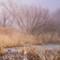 WetlandsWinter-0346