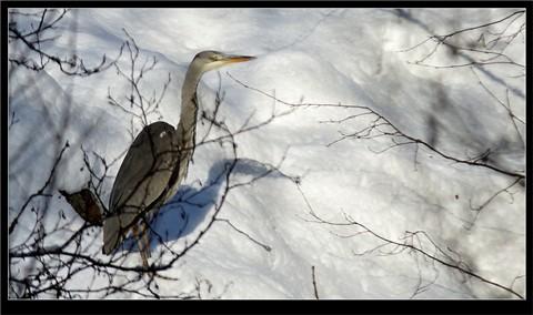 Lost_Heron