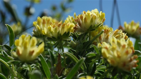 tiny yellow flowers-0466