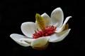 Bodnant Flower.