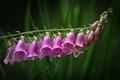 Juneau Flower