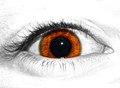 eye spy
