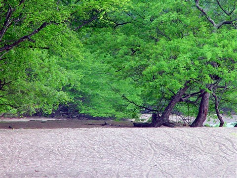 Green & Sand