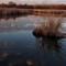 Natural Wetland