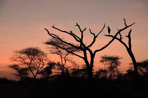 Tanzania belle 096