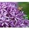 Ethan-Pease---Bee