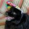 Itsie Has A Bonnet
