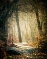 consumnes trail