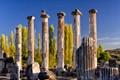 Columns & Poplars
