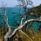 Bizarre Tree Italy
