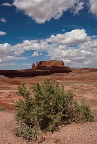Az Desert-1