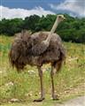 Emu Who