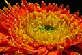 Sparkling Flower !