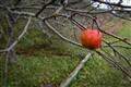 Fall .. But I am not falling