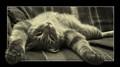 Outstanding Tomcat