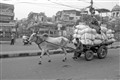 bullock cart in city