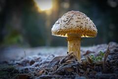 Mushroom Morning