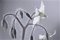 IR Flower